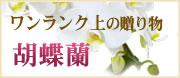 ワンランク上の贈り物 胡蝶蘭ギフト