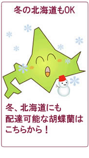 冬の北海道、青森へ胡蝶蘭をお届け