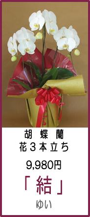 「商品名:ゆい」リーズナブル9,980円 花3本立ち