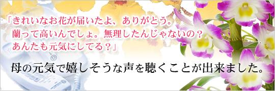 お祝いに、蘭の花を贈る